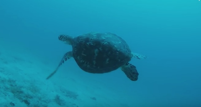 Saving The Sea Turtles of Zanzibar