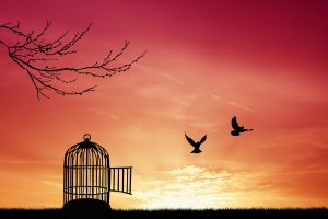 Bird cage silhouette