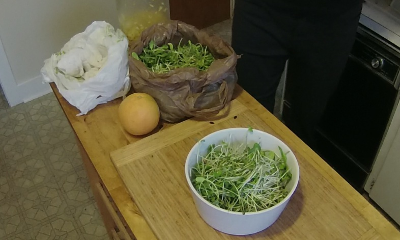 Hypnosis For Your Mouth: Mighty Micro-Greens