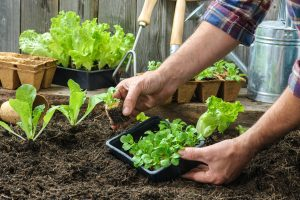 Gardening Theory: A Self Hypnosis Philosophy